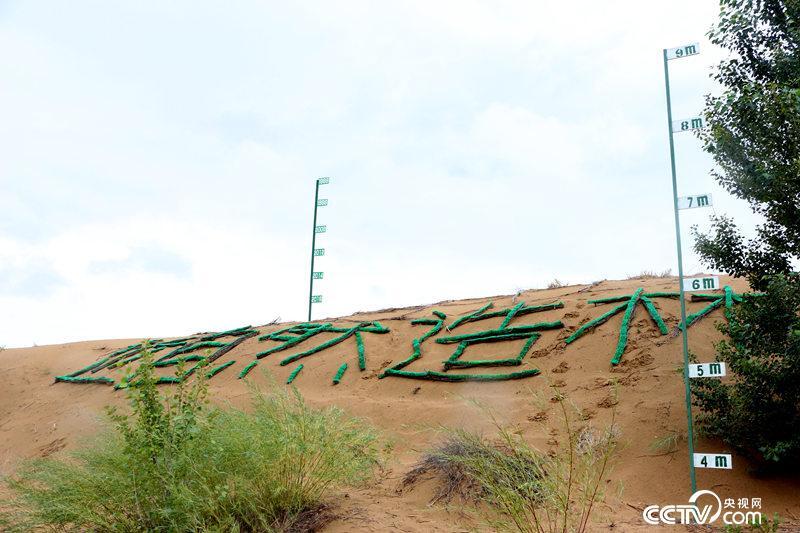 迎风坡种树后沙丘更加平缓,右边的标尺显示沙丘低洼处增加了3米多。