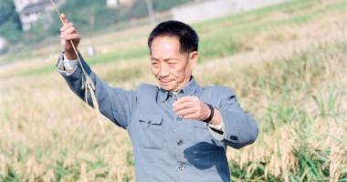 袁隆平:把中国人的饭碗端在自己手里