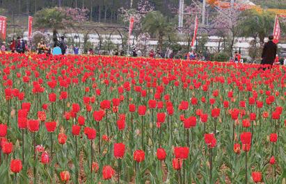 长沙植物园赏花