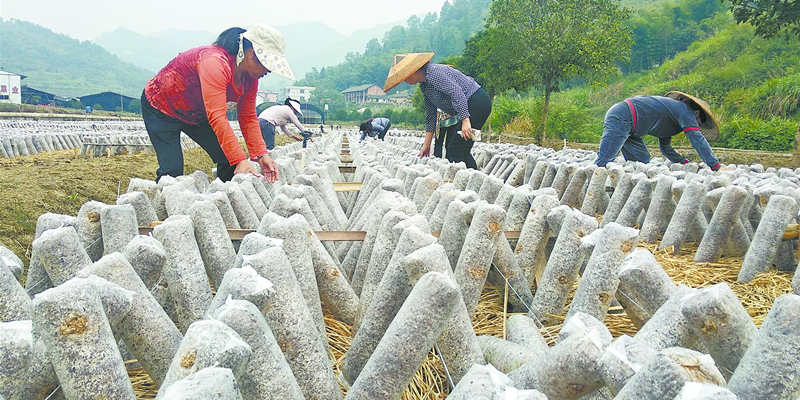 产业扶贫 助农增收