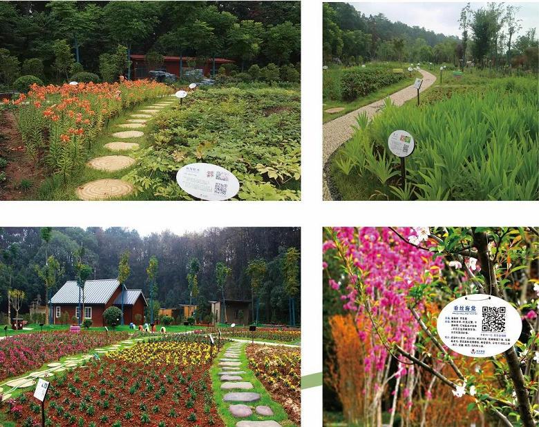 淘乐谷中草药园