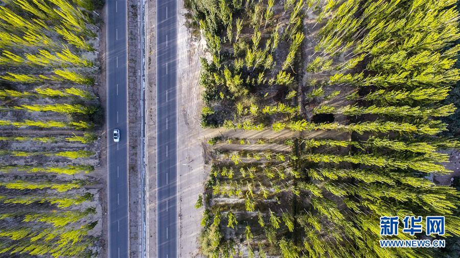 """(在习近平新时代中国特色社会主义思想指引下——新时代新作为新篇章·图文互动)(1)接力三十载 荒漠变""""林海""""——新疆柯柯牙的""""绿色涅槃""""之路"""