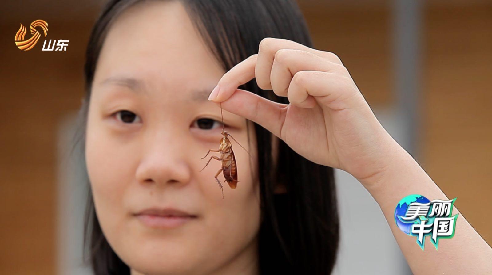 《美丽中国》父女养3亿只蟑螂当宝贝 护林员劝女儿辞职守山