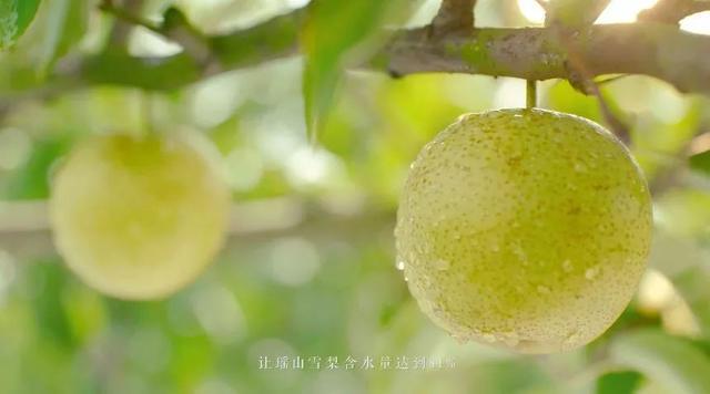 """【扶贫公益广告】永州江华""""瑶山雪梨"""""""