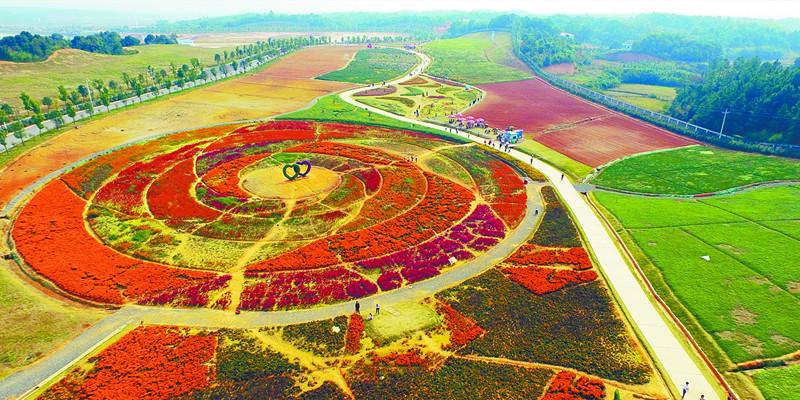 湘阴县洋沙湖国际旅游度假区漫步花海