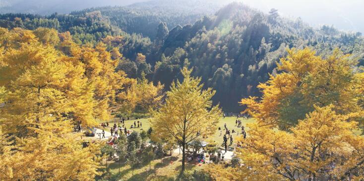 【镜观其变——庆祝改革开放40年】林业:从资源到生态