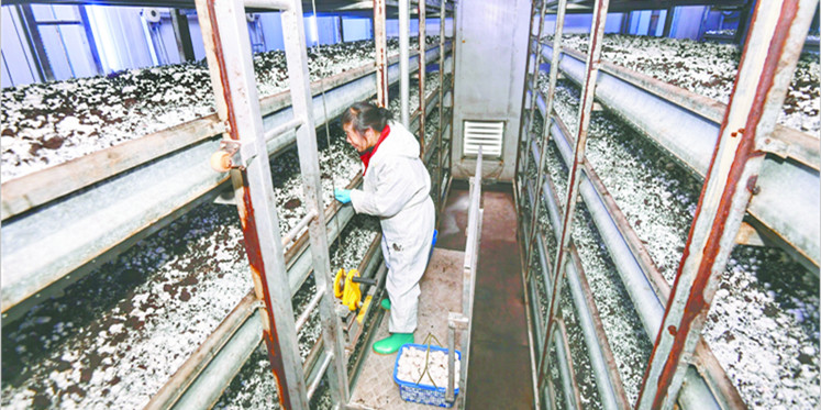 小蘑菇撑起大产业