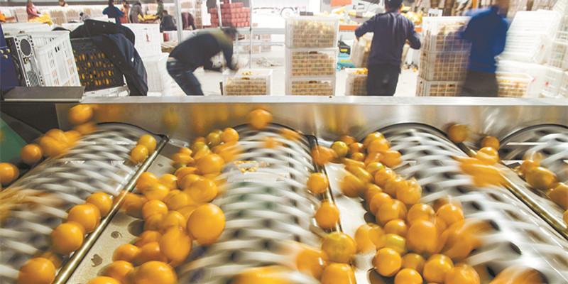 冰糖橙网络销售旺