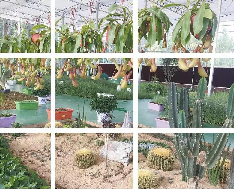 淘乐谷温室体验坊