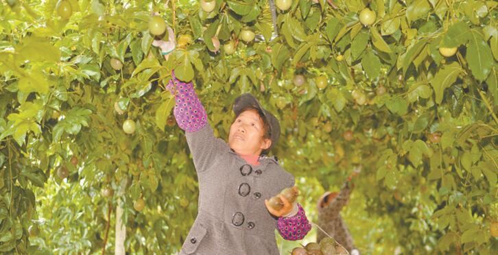 农业产业化 村民齐致富