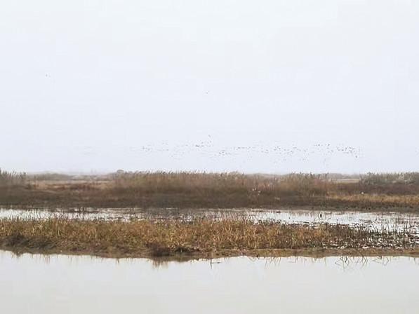 【湖湘自然笔记】采桑湖:喧嚣过后,复归宁静