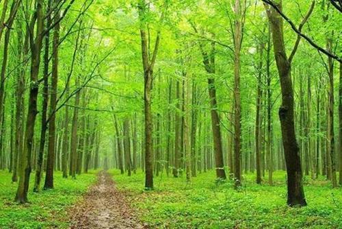 株洲9个义务植树点将添绿2万余株