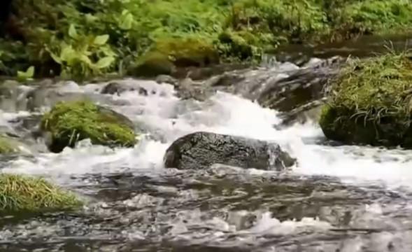 生态优先绿色发展 建设美丽湖南
