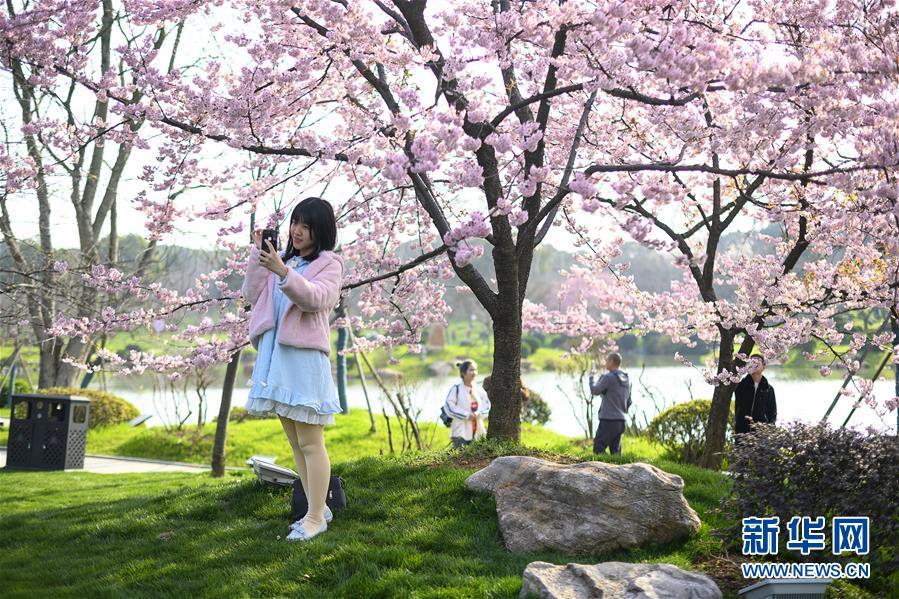 (社会)(5)武汉东湖樱花节开幕