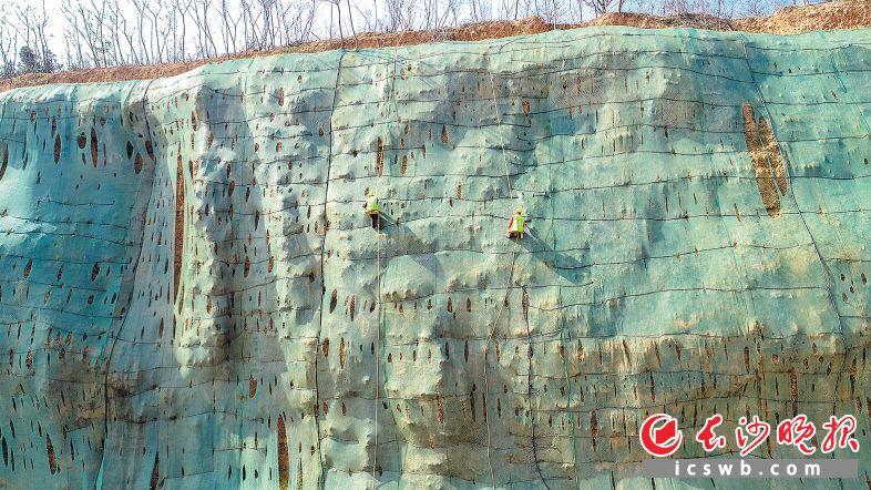 """70米高的坑壁上,""""矿坑美容师""""依靠保险绳平衡身体,在岩石上播种绿色。"""