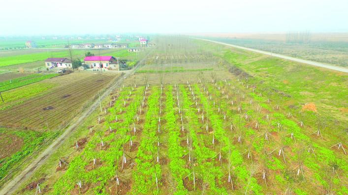 岳阳市长江岸线完成复绿8050亩 最美岸线初露芳容