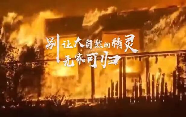 清明节森林防火宣传片
