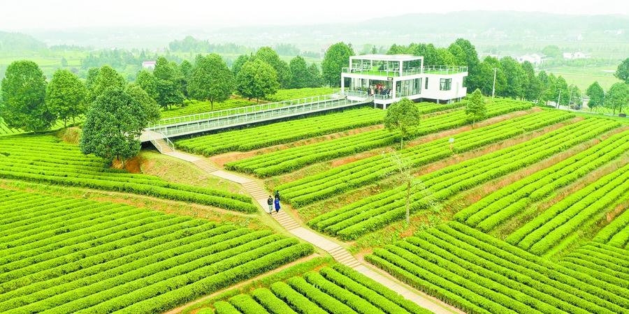 农旅融合促发展