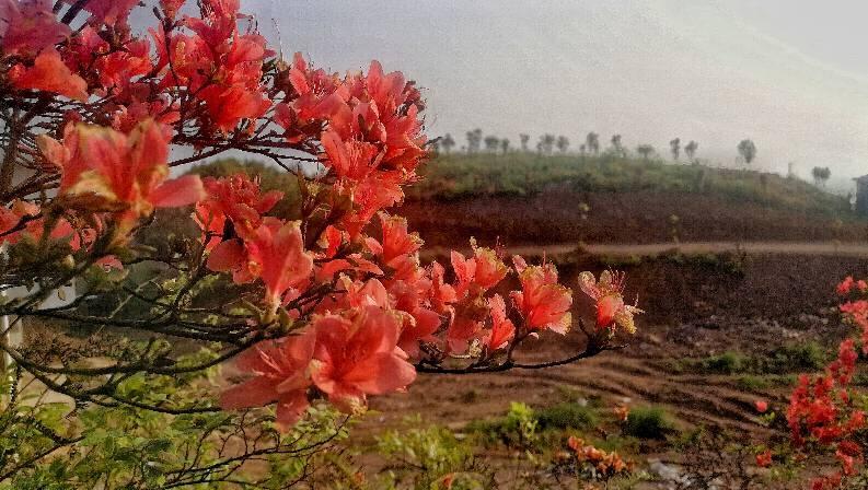 宜山岭杜鹃花红艳艳 新湖南www.hunanabc.com