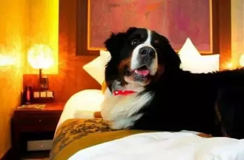 国际导盲犬日丨五一小长假,带汪星人出行请收好这份清单! 新湖南www.hunanabc.com