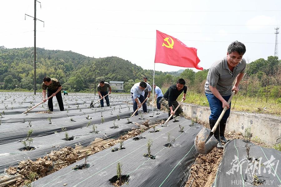 党日活动助生产自救 新湖南www.hunanabc.com
