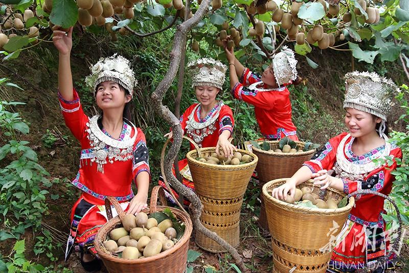 记者扶贫在一线丨特色水果富了苗乡 幸福笑容洋溢在村民脸上 新湖南www.hunanabc.com