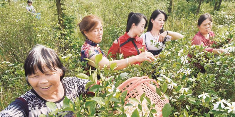 特色产业 助农增收