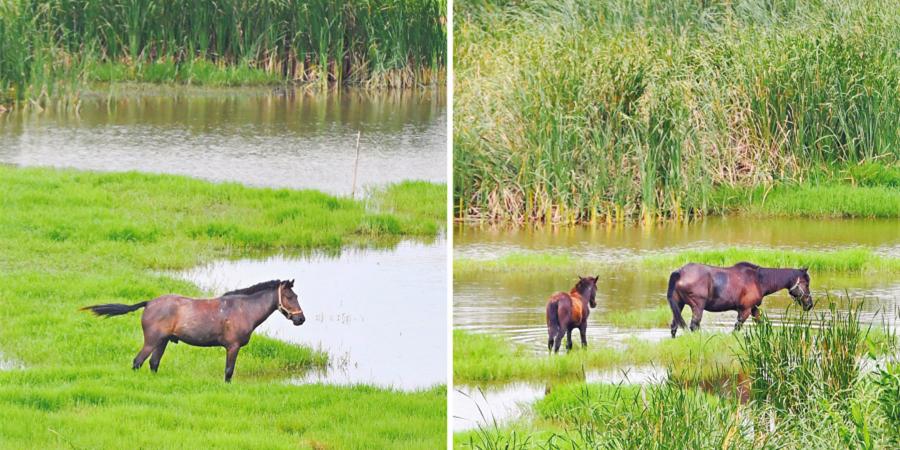 湿地公园放牧,违规!