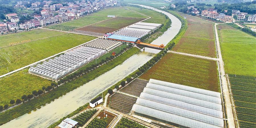 蔬菜产业促农增收