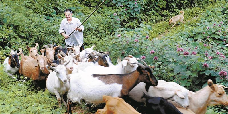 羊儿壮 收入增
