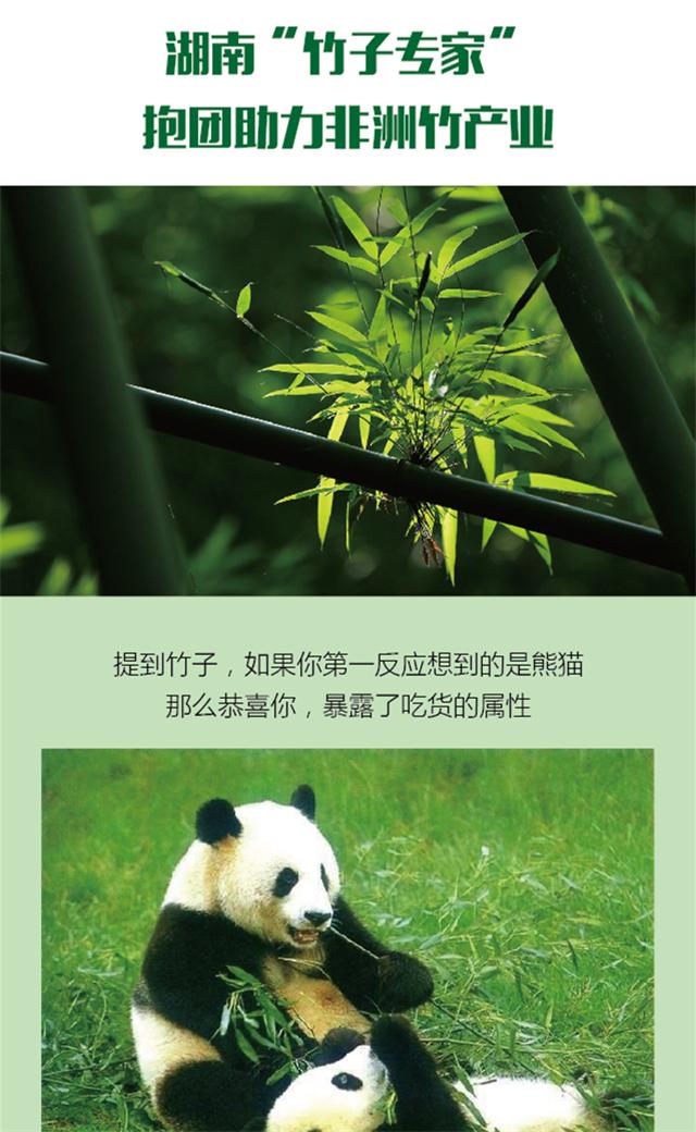 """【图解】湖南""""竹子专家""""抱团助力非洲竹产业"""