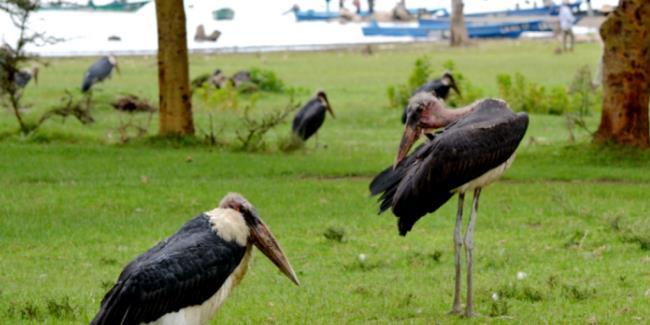 """【湘通肯尼亚】""""打卡""""肯尼亚:这些野生飞禽,你都认识吗"""