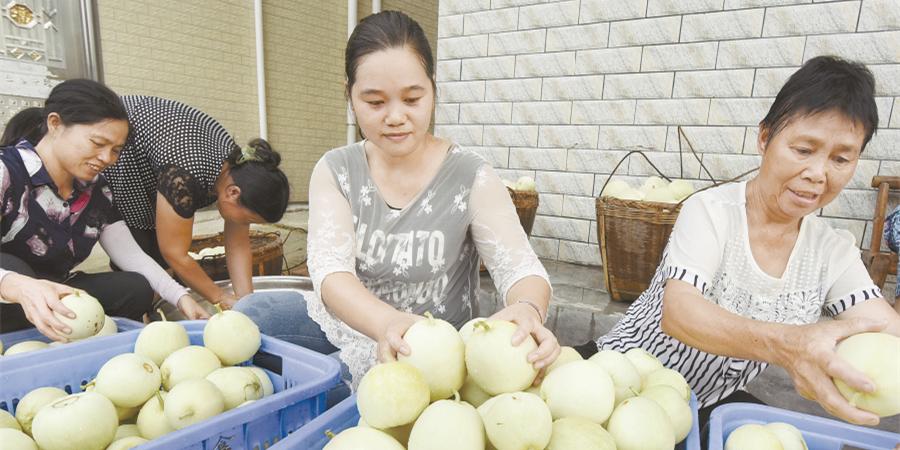 富硒香瓜 助农增收