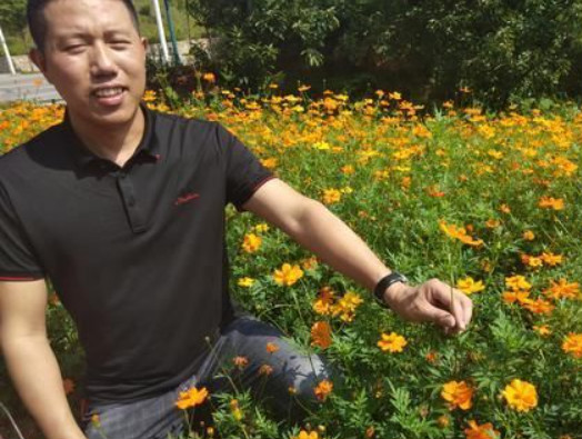 怀化迎丰公园花坡10亩鲜花惊艳亮相