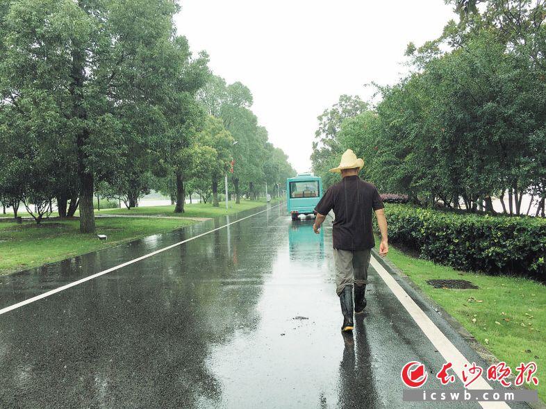 ↑7月12日下午4时许,橘子洲景区内路面整洁。长沙晚报全媒体记者 王志伟 摄