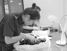长沙机场海关一个多月直接进口水果46吨 记者探访进口水果店