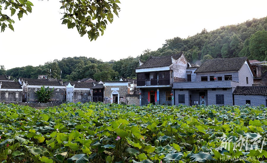 古村新貌欢乐多 新湖南www.hunanabc.com