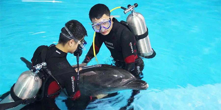 海豚新成员入住长沙海底世界
