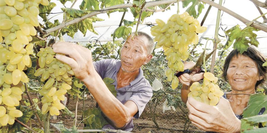 特色果业 助农增收