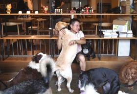9月5日,长沙市人民西路,李晶正和店里的狗一起玩耍。潇湘晨报 图