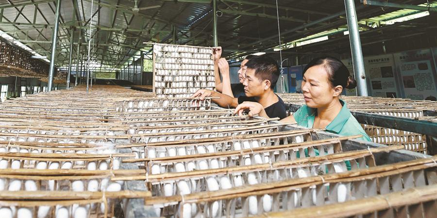 村办产业 助力脱贫