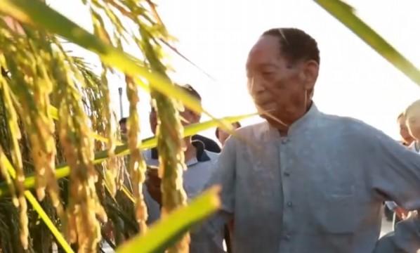 袁隆平:荣誉属于全体农业科技工作者
