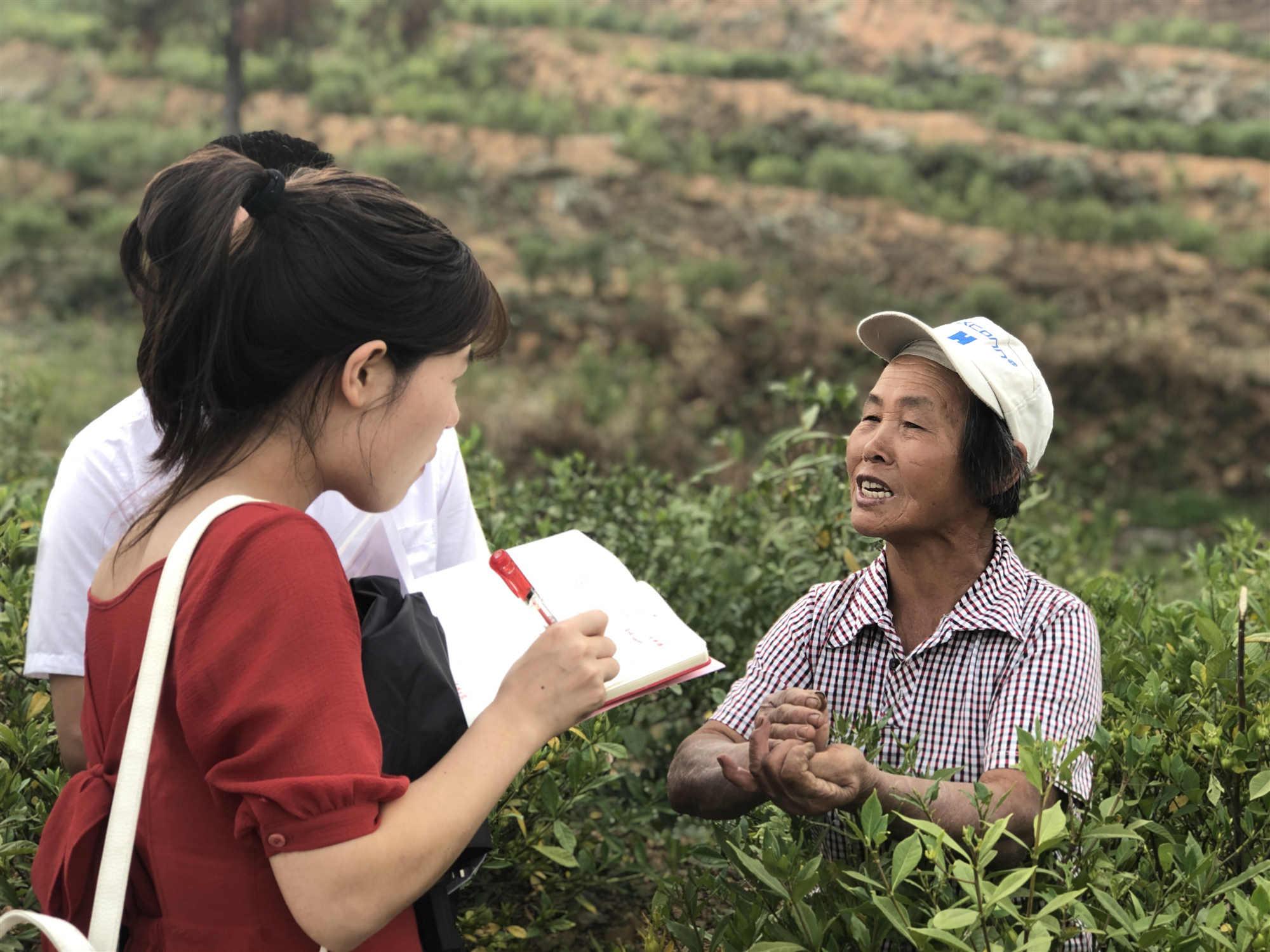 双峰县甘棠镇双新村黄栀子基地 务工的贫困户忙
