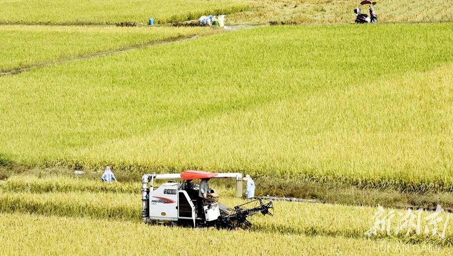 跨省作业 助力收割 新湖南www.hunanabc.com