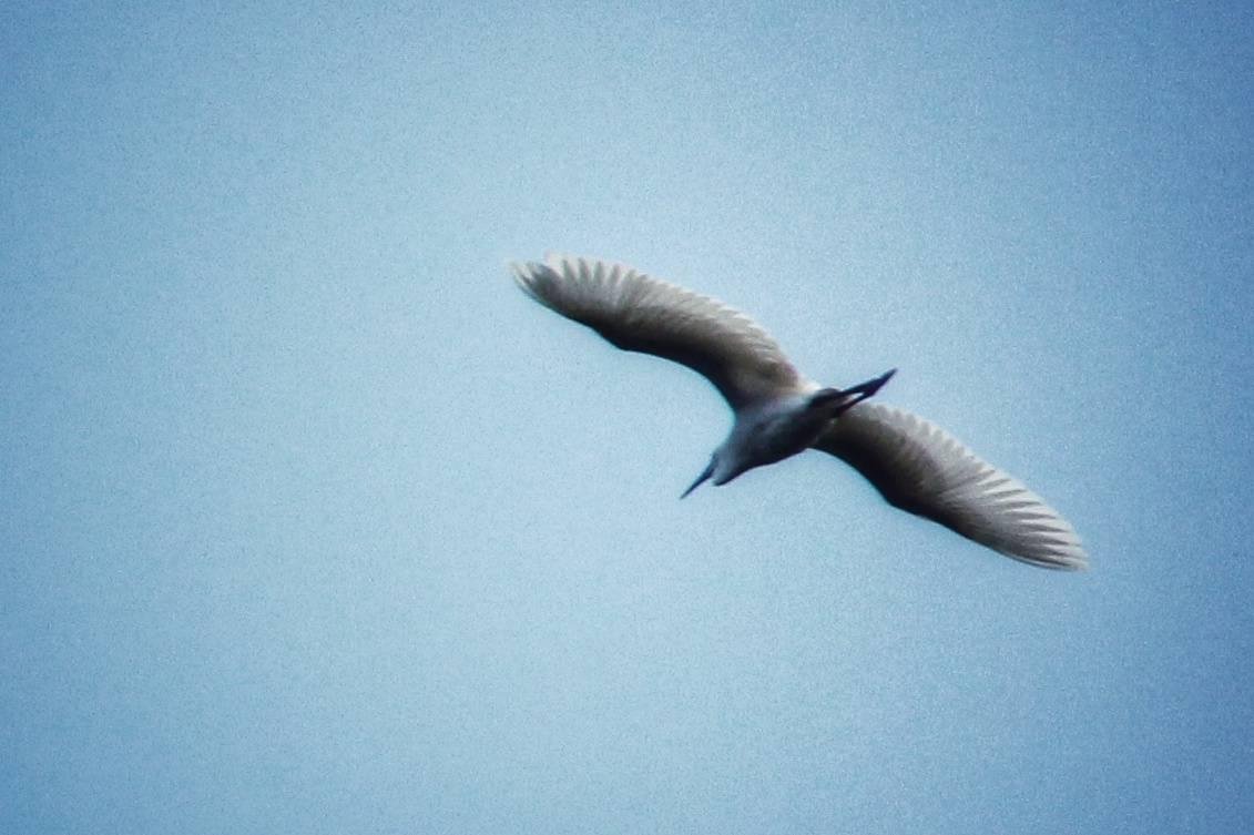 月亮岛上鸟儿飞 新湖南www.hunanabc.com