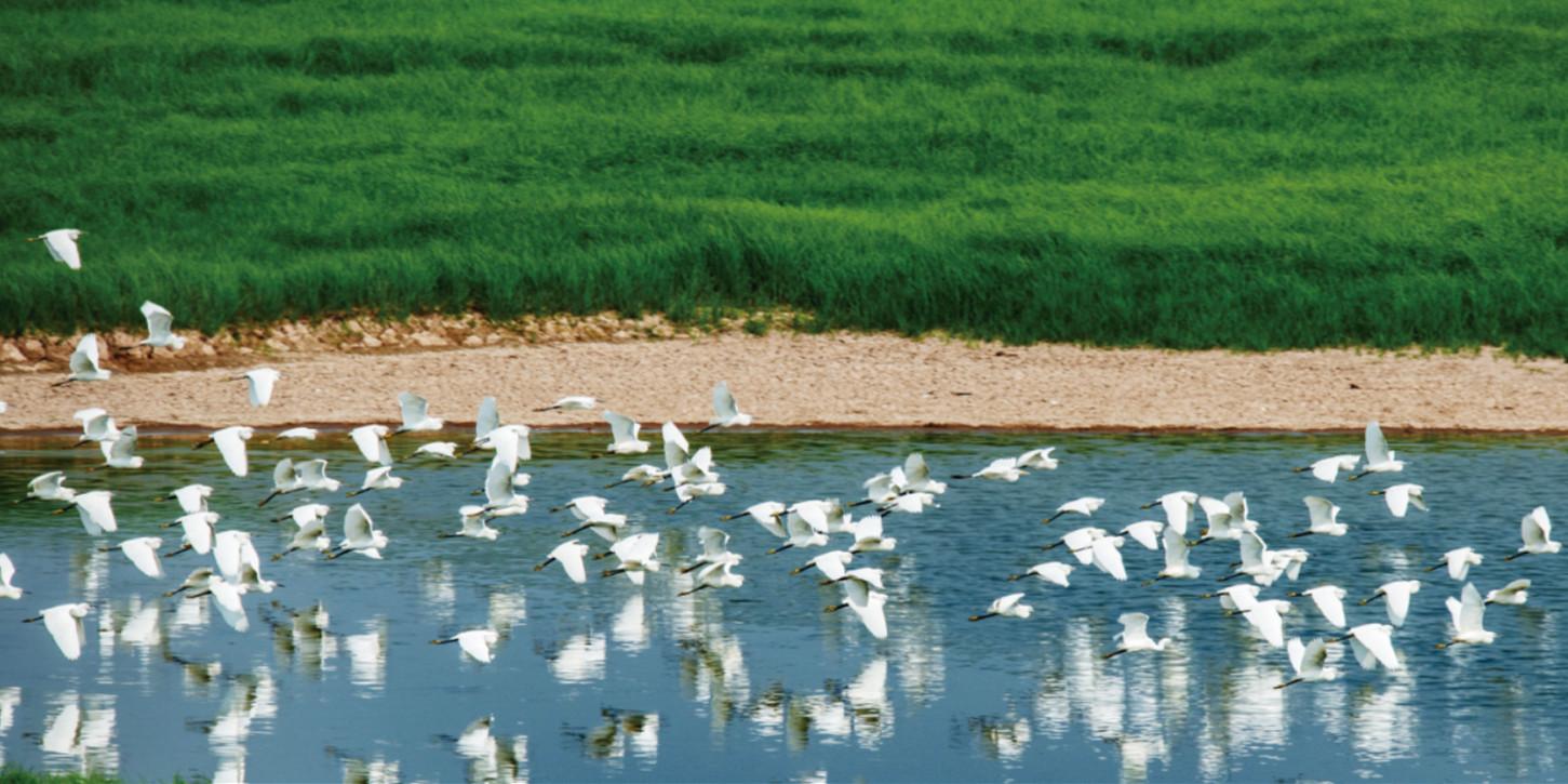 东洞庭湖鹭鸟群舞江豚戏波