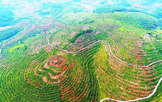 油茶产业助增收