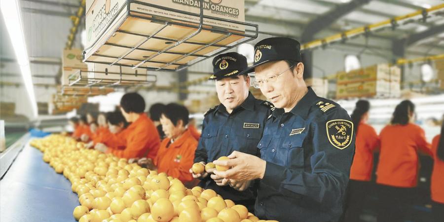 海关助力 柑橘出口