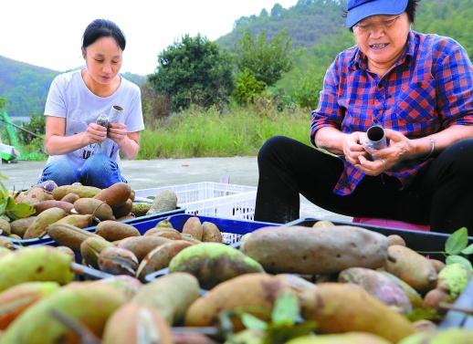 野果种植富农家