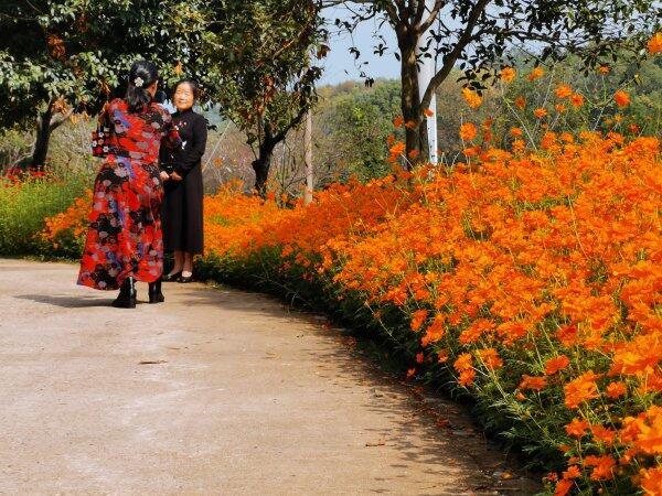 深秋时节去长沙这些地方赏花看叶